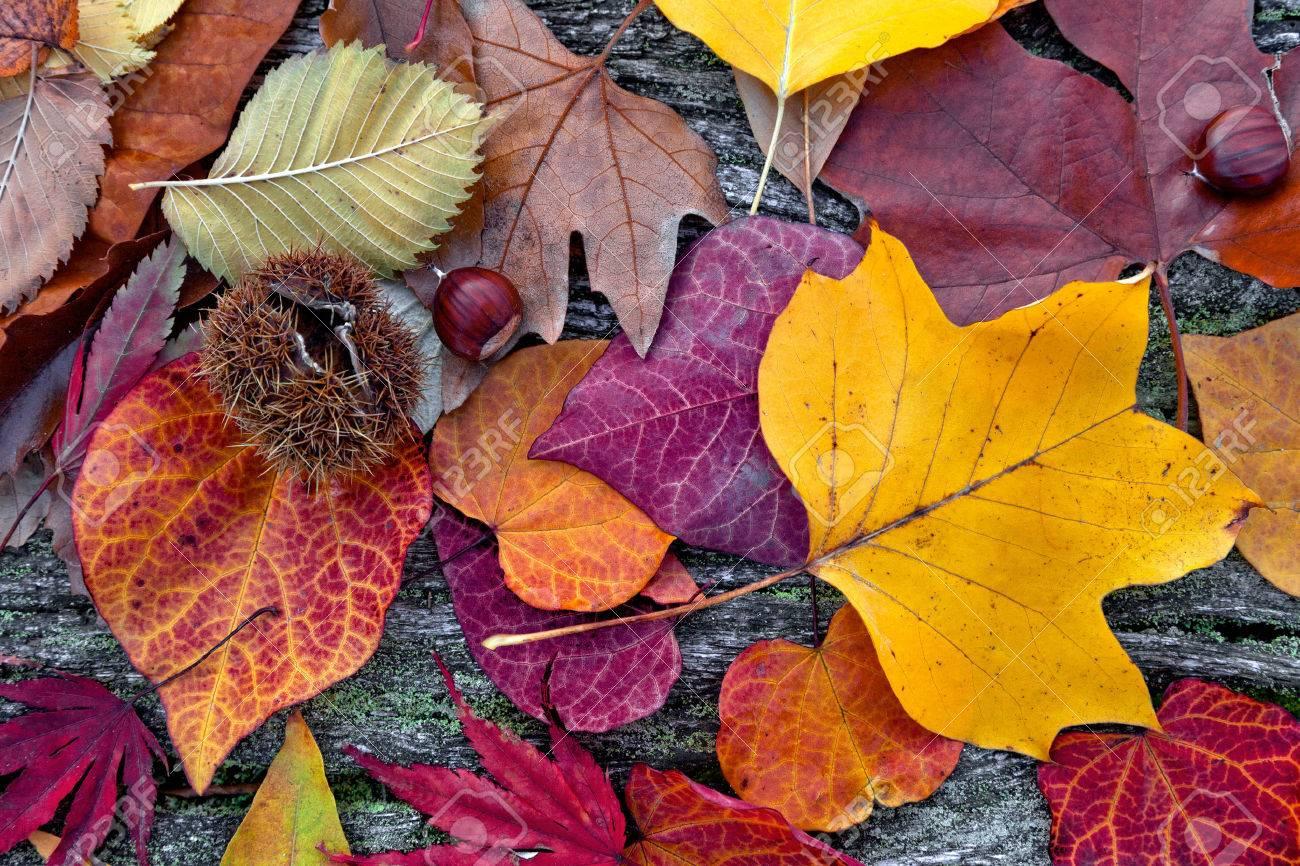 Abstrakten Hintergrund Der Blatter Im Herbst Herbst Hintergrund