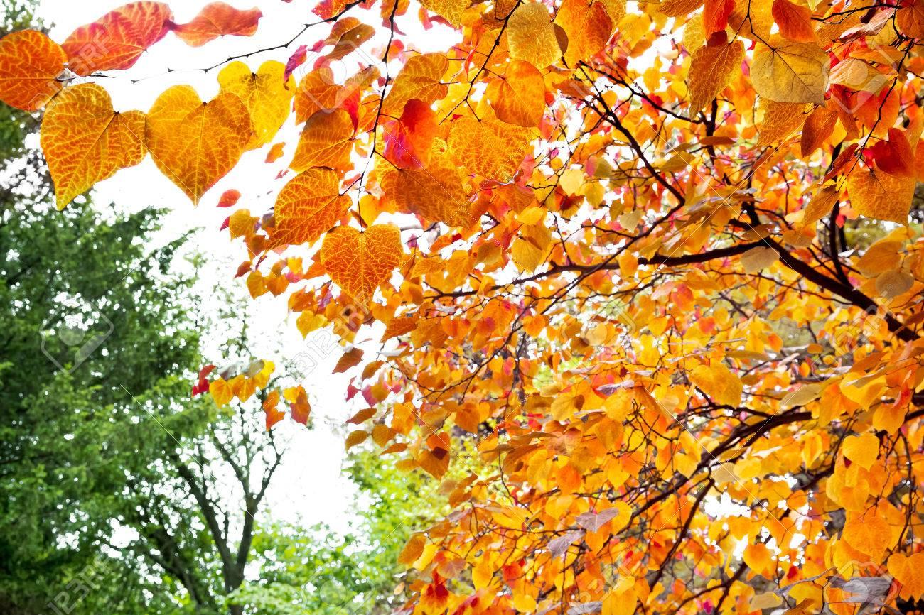 Zusammenfassung Hintergrund Der Blatter Im Herbst Herbst