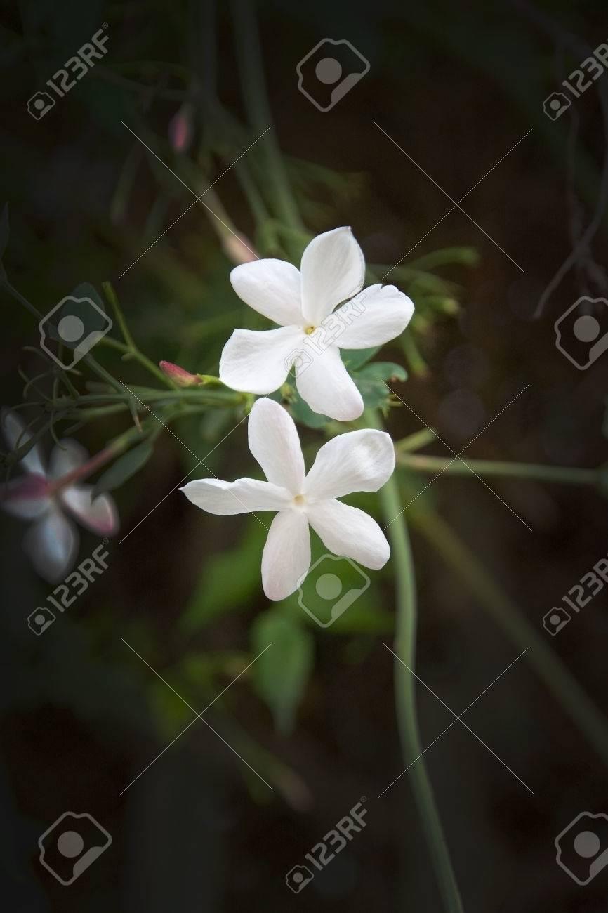 White flowers closeup in palma de mallorca in november stock photo stock photo white flowers closeup in palma de mallorca in november mightylinksfo