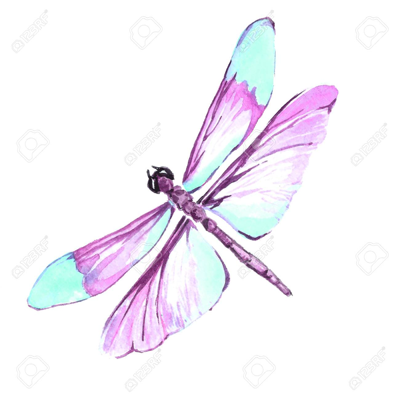 watercolor image of a dragonfly on a white background isolated