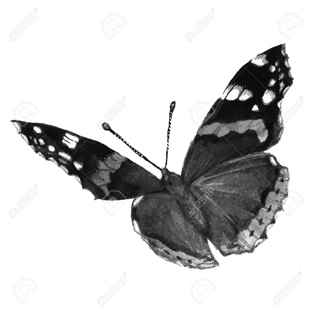 Watercolor butterfly black and white handmade