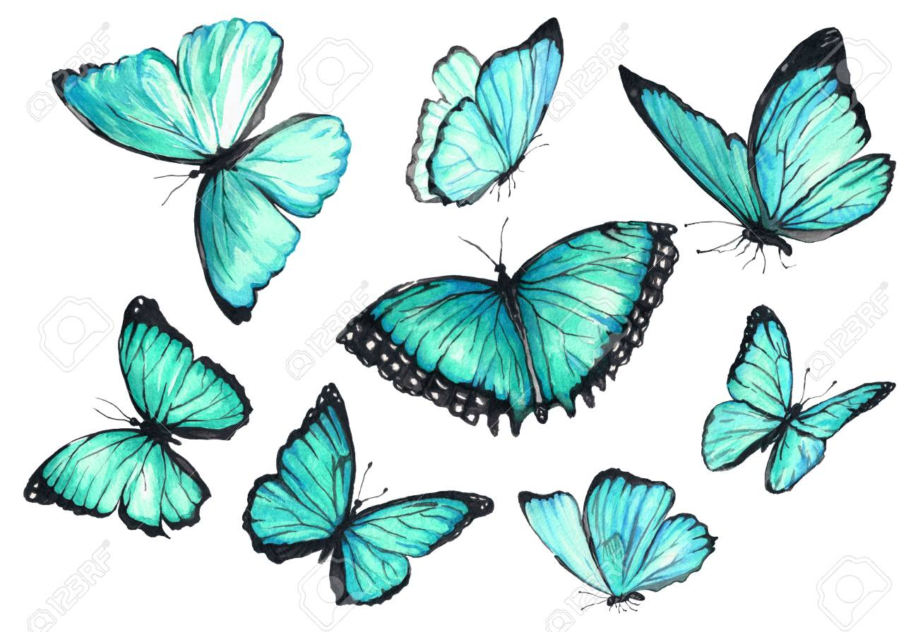 b270870eb89748 Collection of watercolor images of beautiful butterflies. A set of  illustrations of an insect.