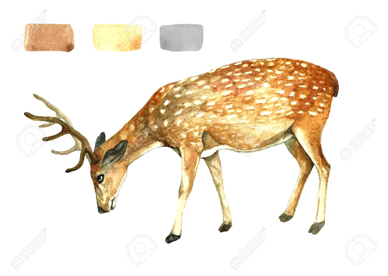 figure forest deer paints watercolor illustration of animal stock photo picture and royalty free image image 118688639 stock illustration