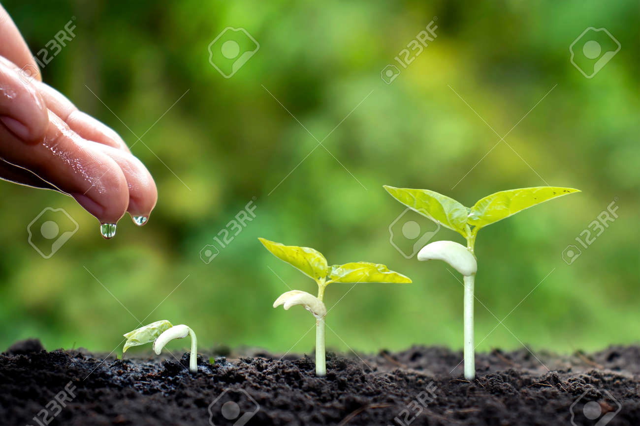 Growing crops on fertile soil and watering plants, including showing stages of plant growth, cropping concepts and investments for farmers. - 159303024