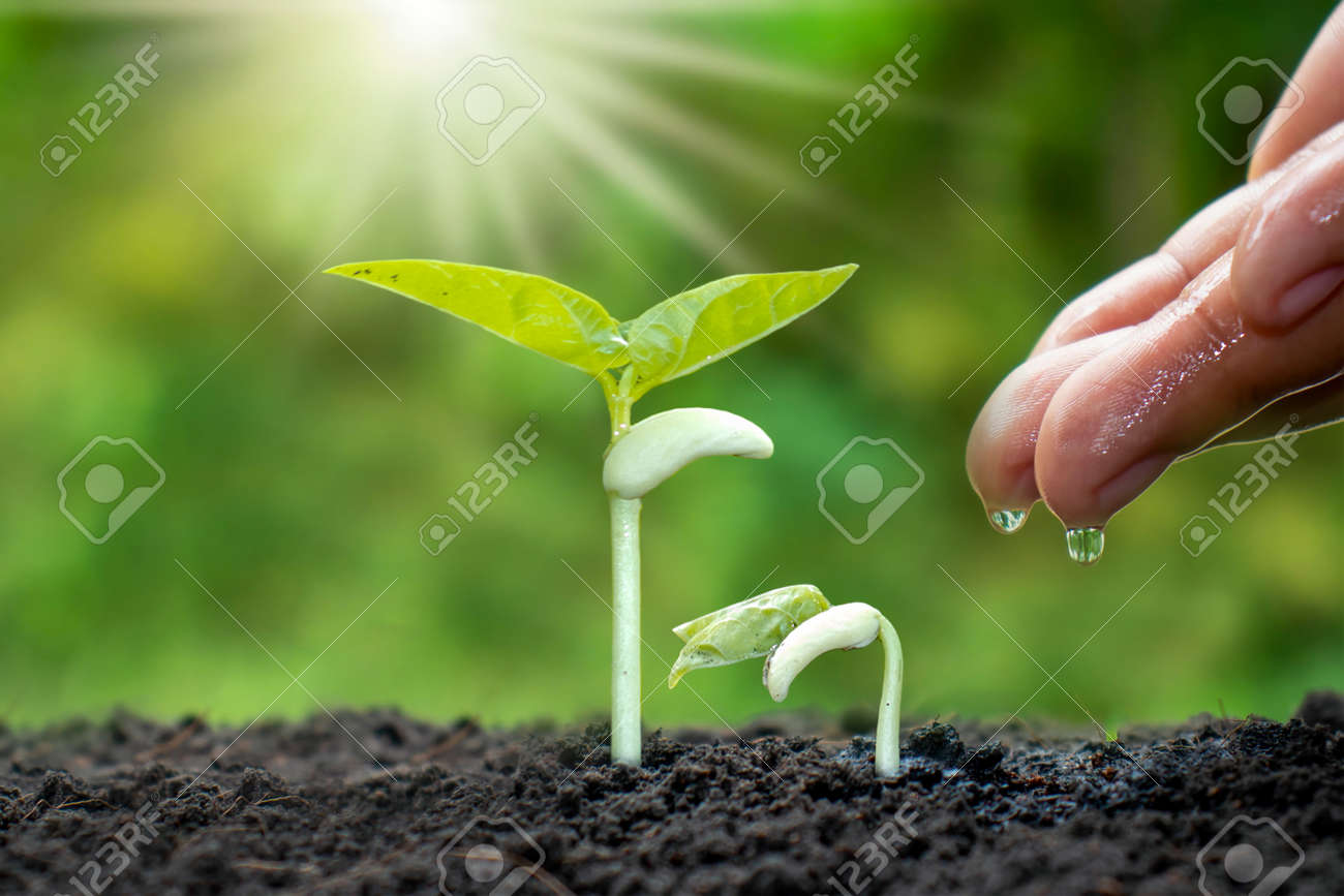 Growing crops on fertile soil and watering plants, including showing stages of plant growth, cropping concepts and investments for farmers. - 159303141