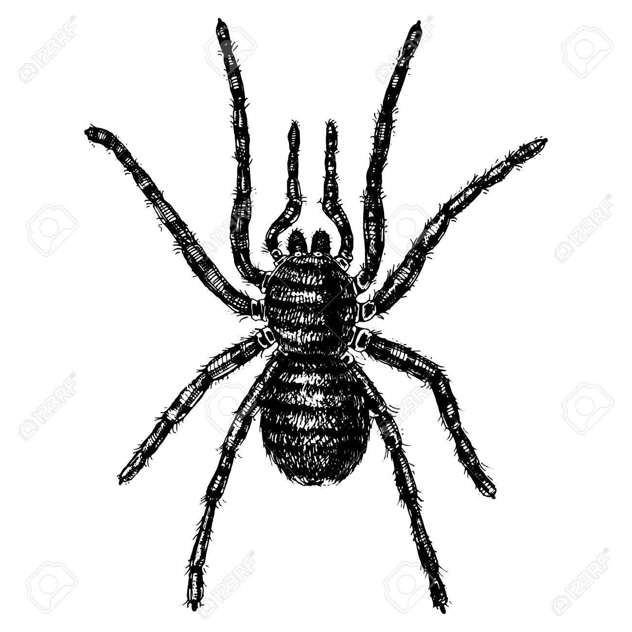Fein Spinnen Vorlage Zeitgenössisch - Beispiel Wiederaufnahme ...