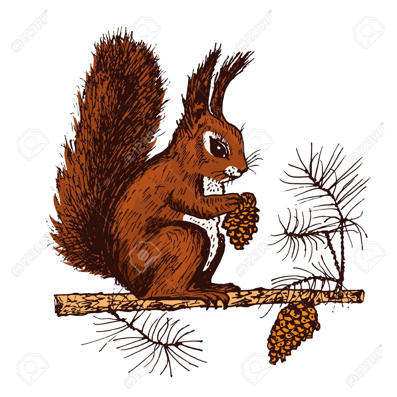 Christmas Squirrel.Christmas Squirrel And Animal With Fir Cone In The Forest Winter