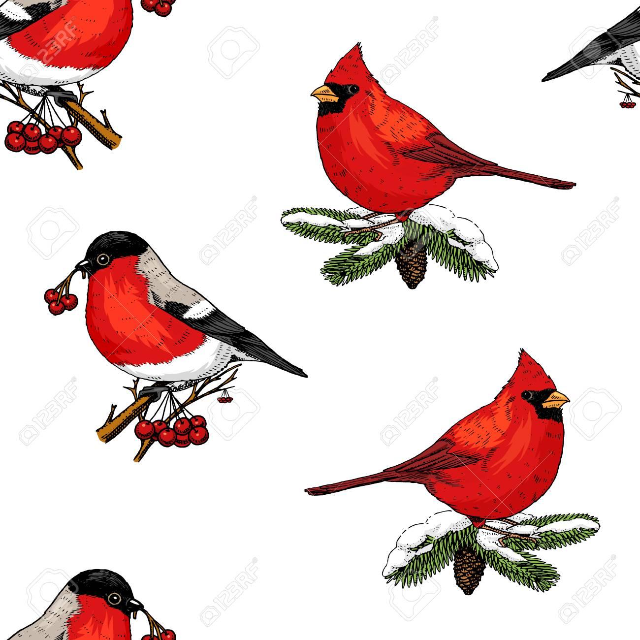 Christmas Cardinals Clipart.Seamless Pattern Holly And Bullfinch Red Cardinal Birds Merry