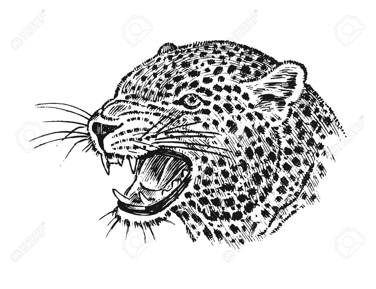 Japanese Wild Leopard Portrait Asian Cat Profile Of Head Or Royalty Free Cliparts Vectors And Stock Illustration Image 106413299