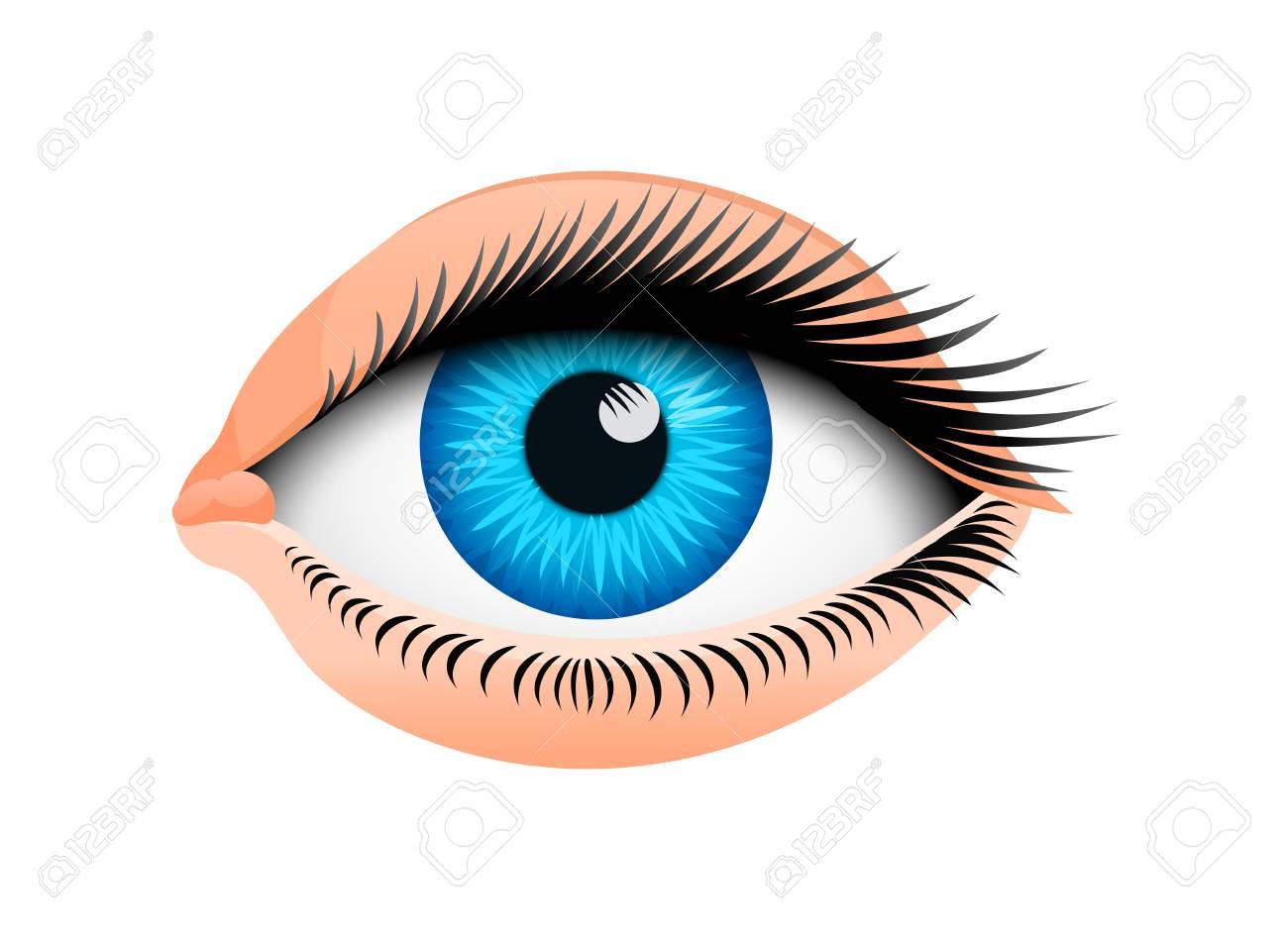 Eye Vector Illustration Human Biology Sensory Organ Anatomy