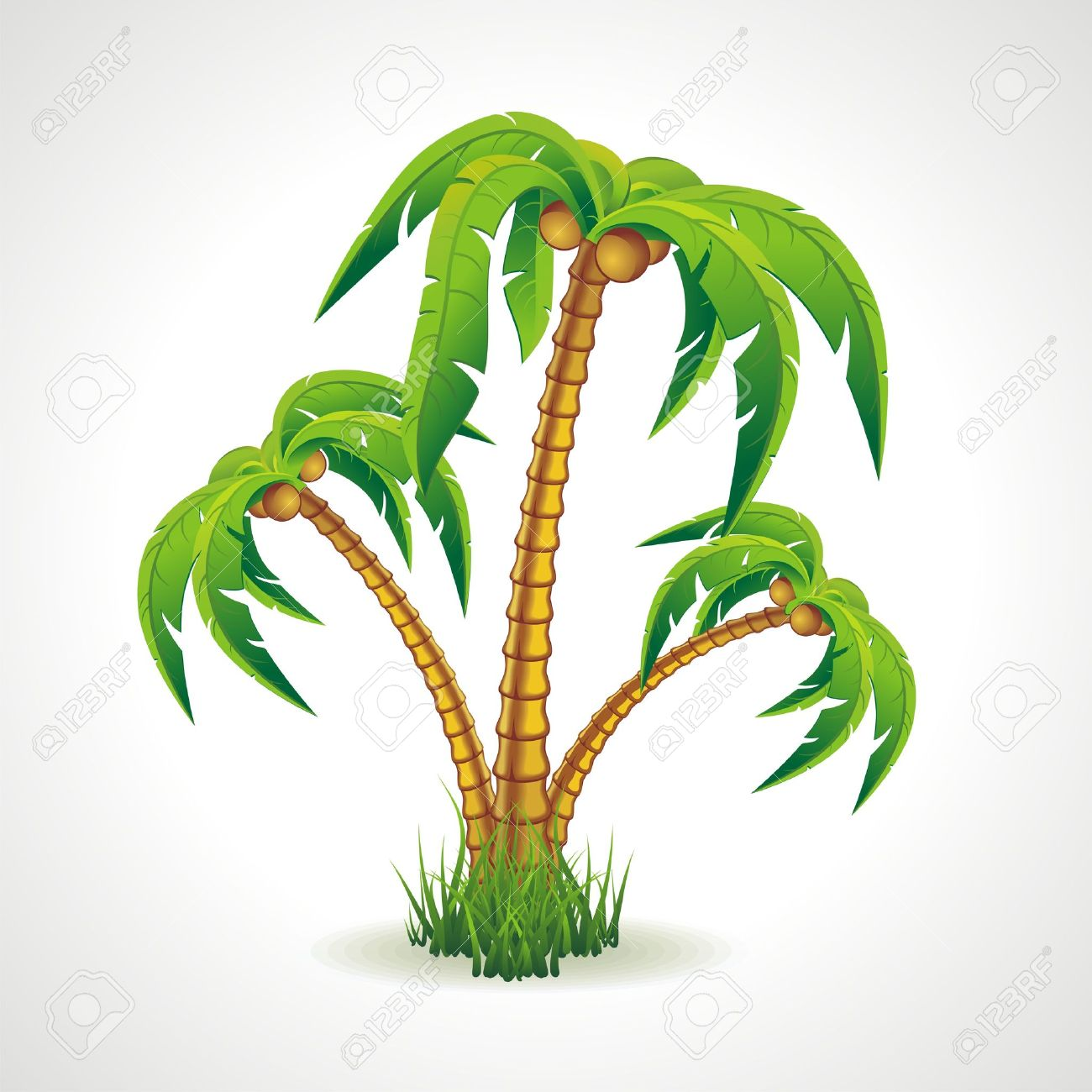 Vector illustration of the palm trees width coconuts Stock Vector - 14800705