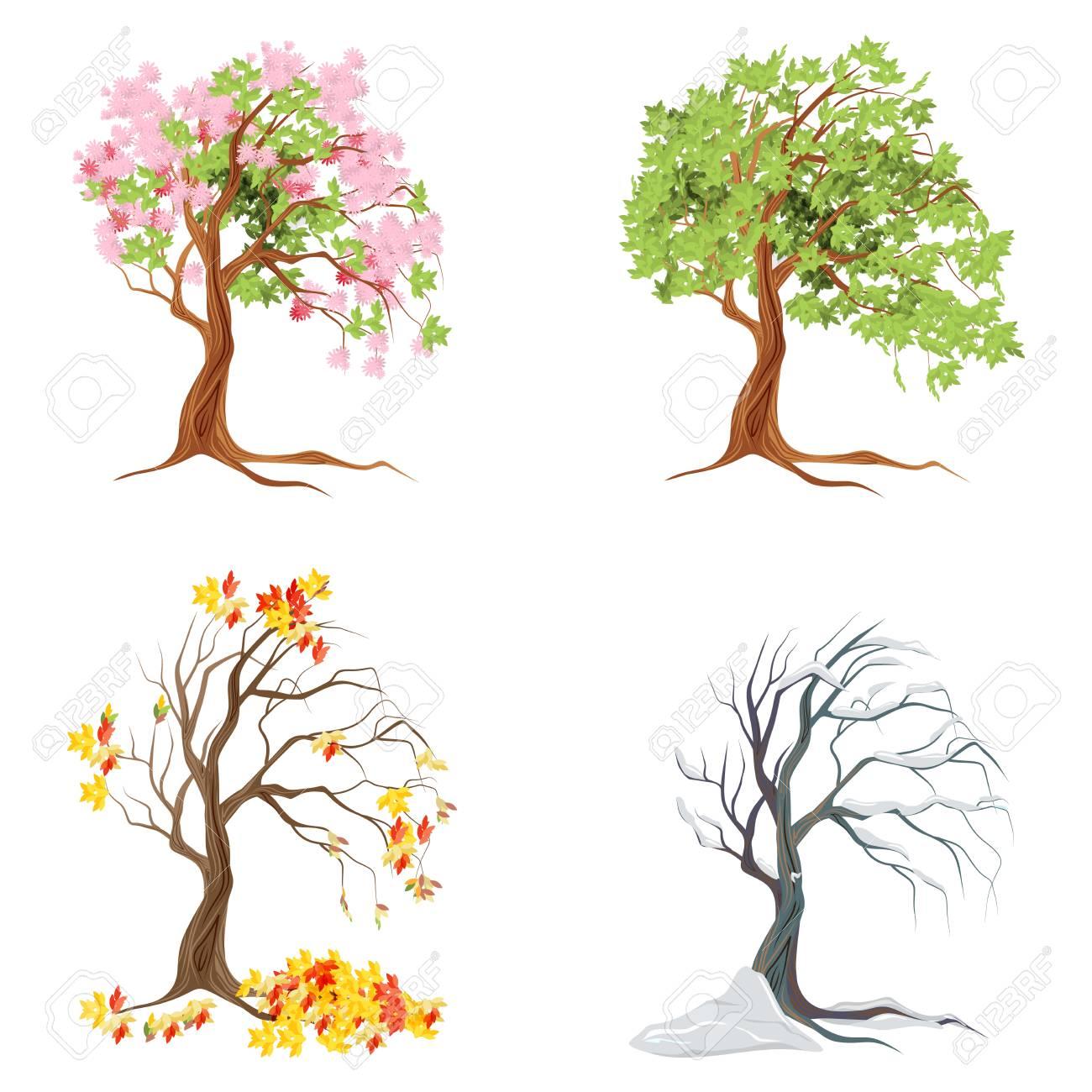 ca75eb0a7556 Cuatro árboles de temporadas en el fondo blanco. Verano, primavera, otoño e  invierno.