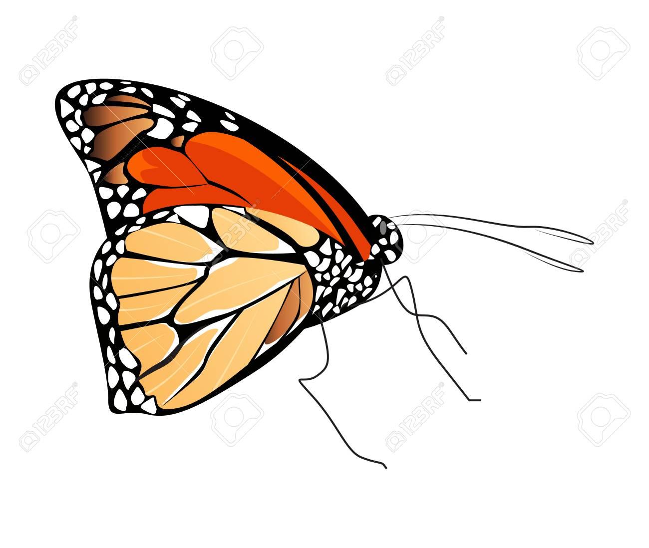 Berühmt Schmetterlingsbild Zu Färben Fotos - Beispiel Wiederaufnahme ...