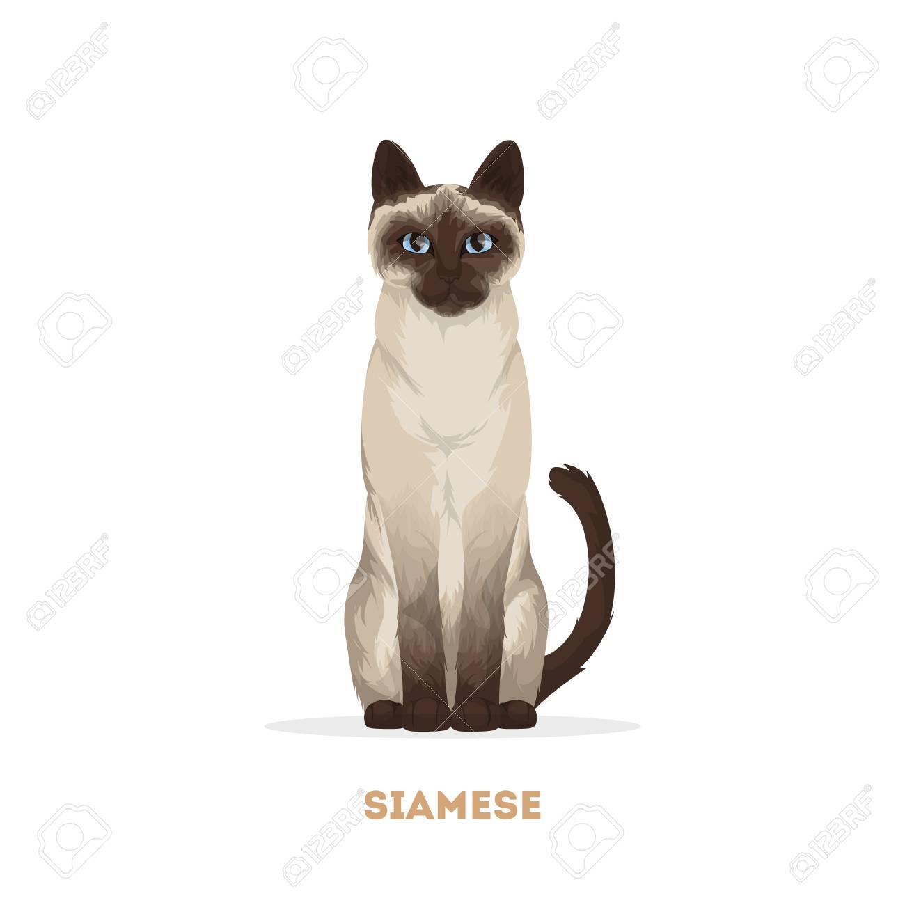 白い背景の上の分離のシャム猫のイラスト素材ベクタ Image 83876921