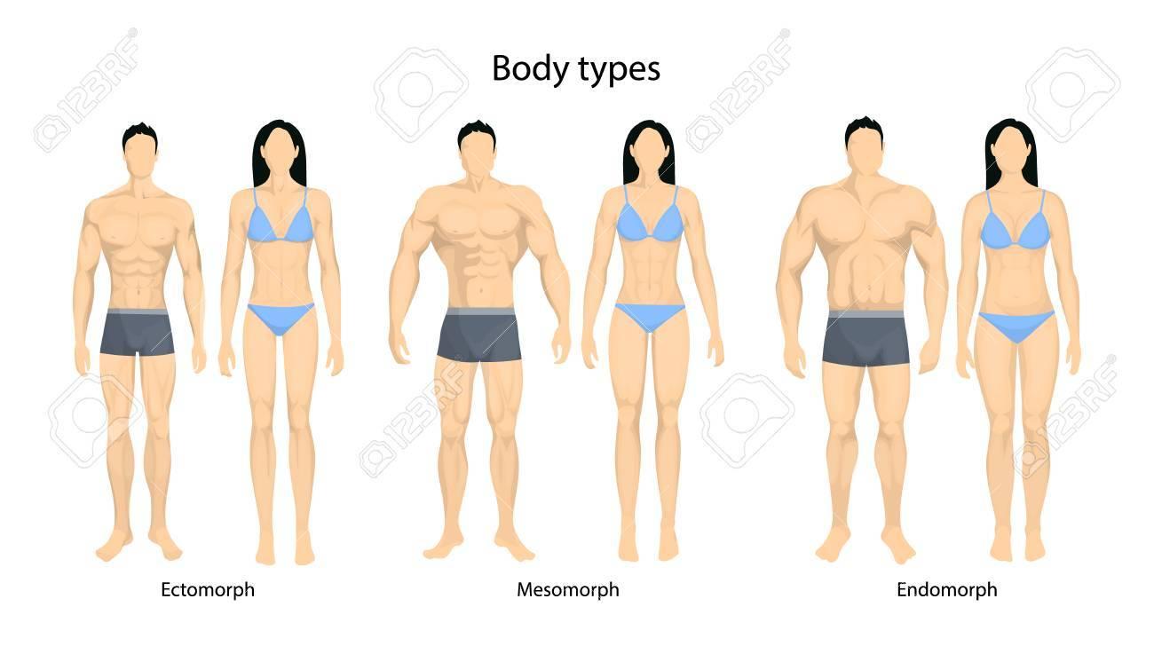 durchschnittlicher männlicher Körpertyp
