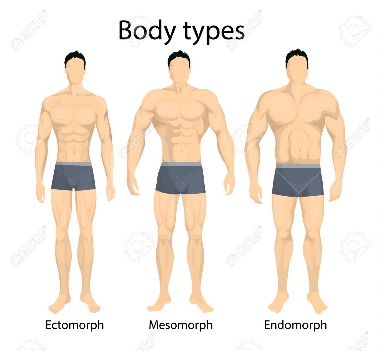 Male body types. - 88525749