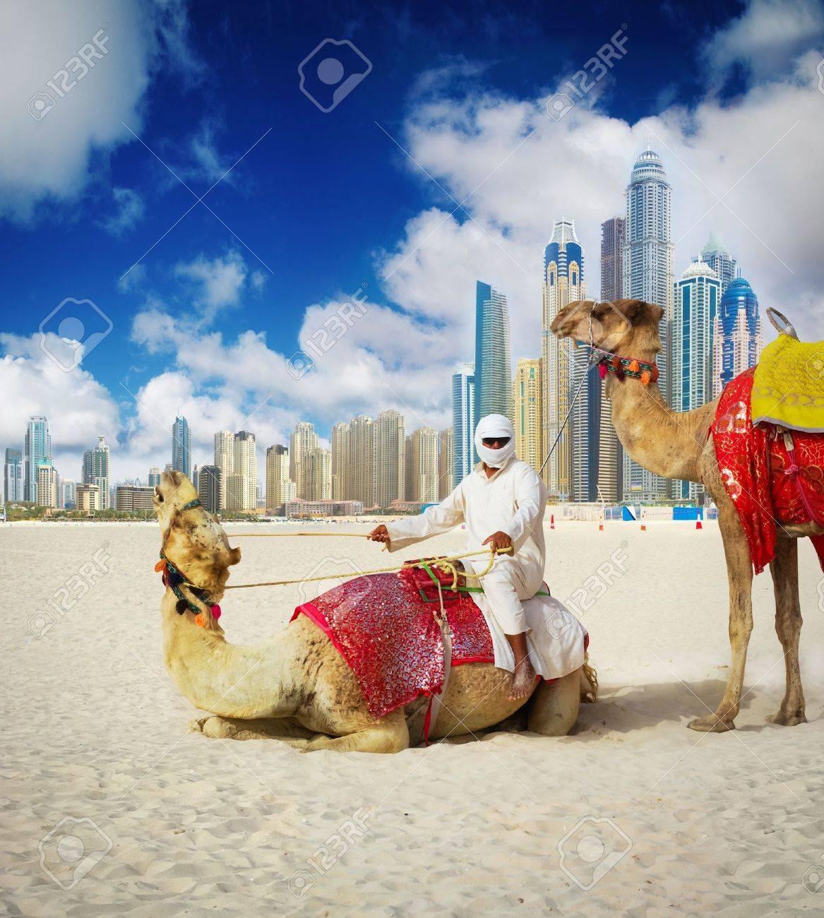 Camel on dubai beach united arab emirates stock photo picture camel on dubai beach united arab emirates stock photo 15194426 thecheapjerseys Images