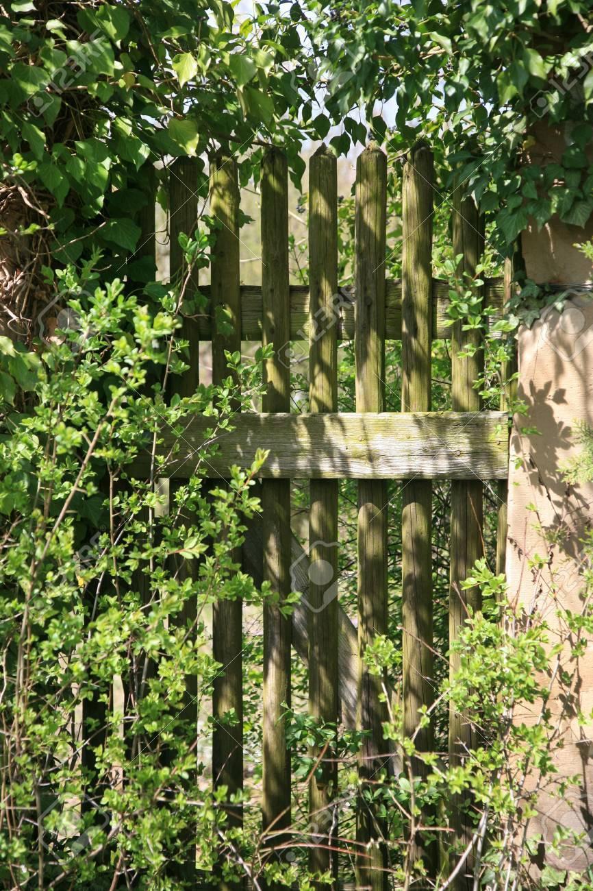 Old envahi porte de jardin en bois et de clôture