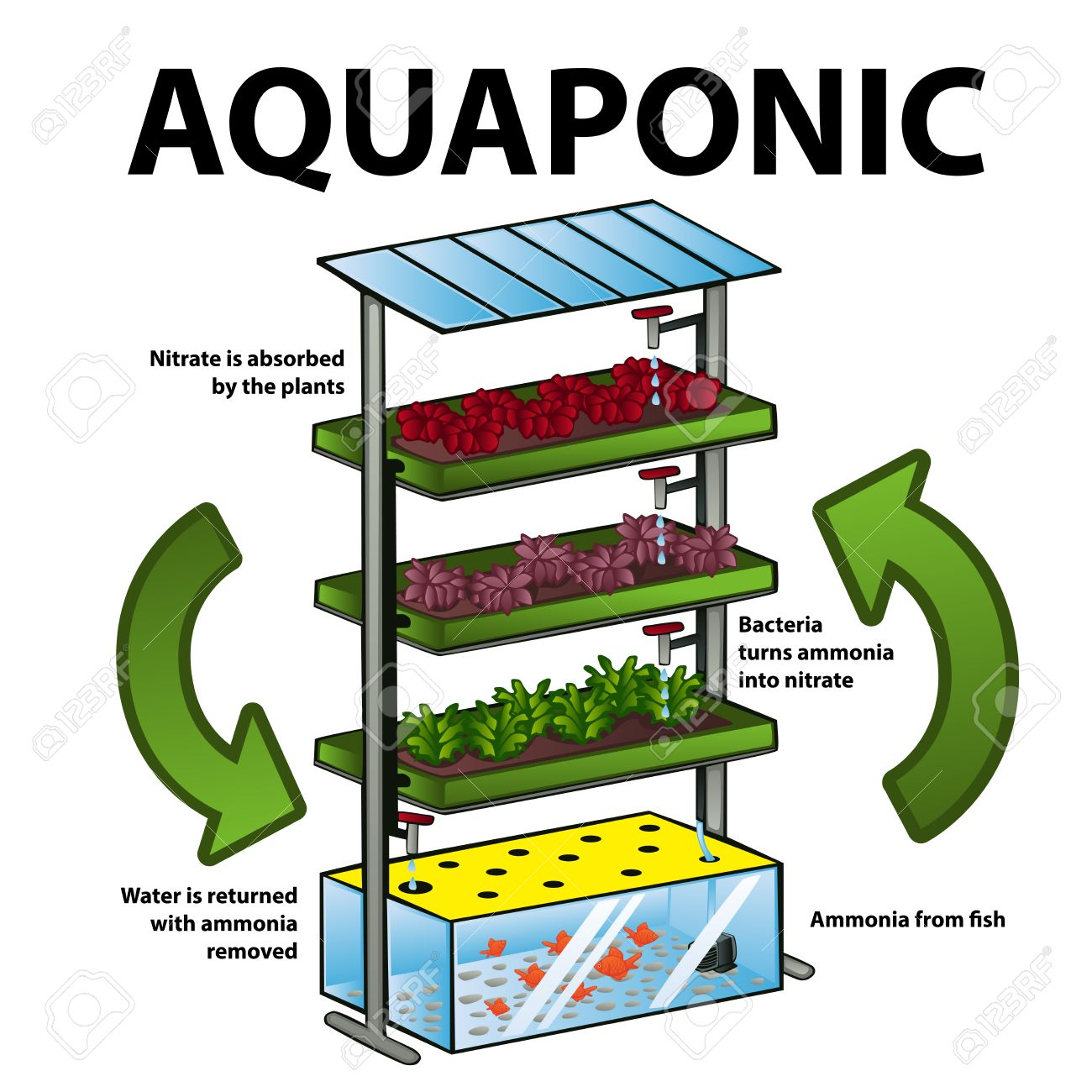 A vector illustration of aquaponic system Stock Vector - 39638243