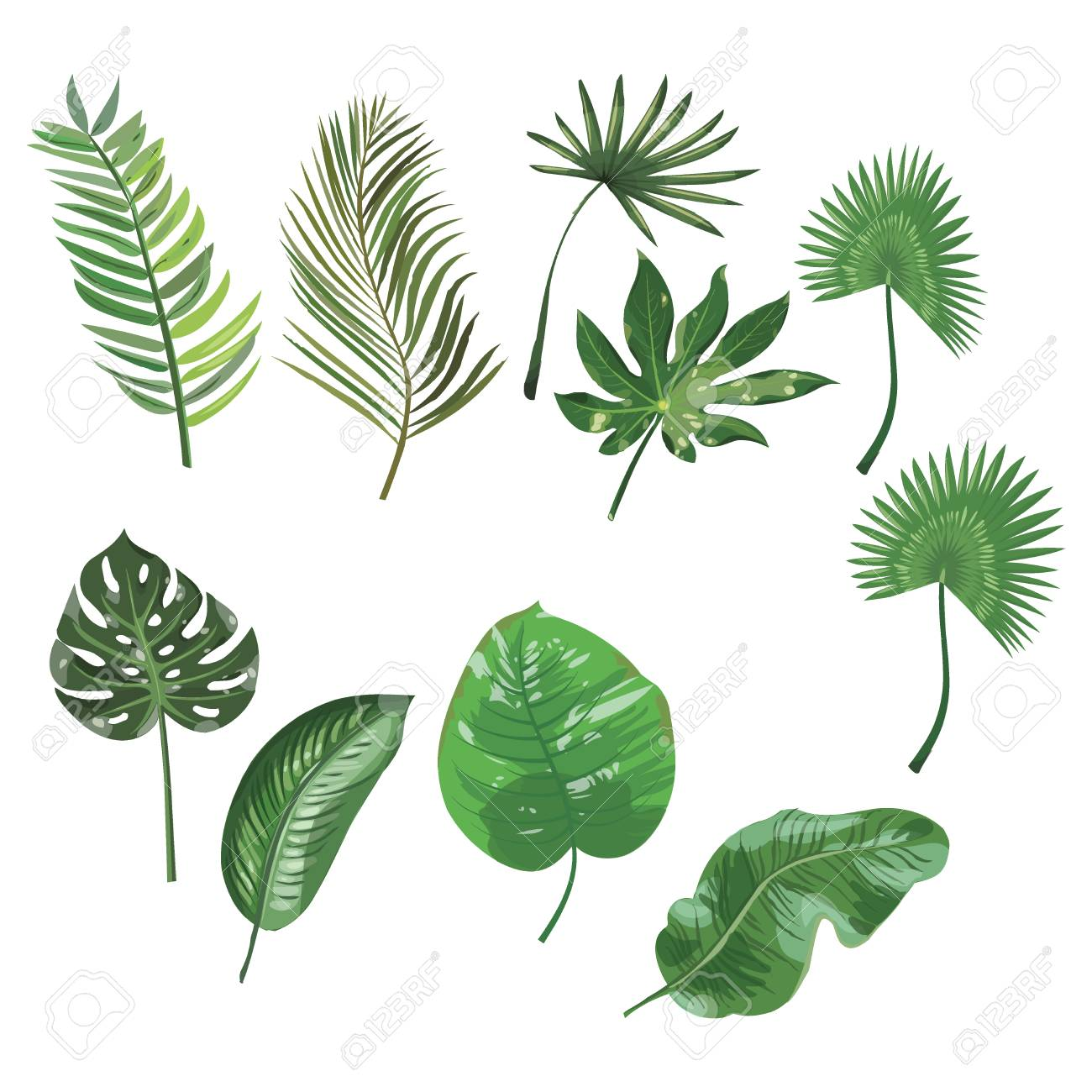 Set Of Leaves Of Tropical Plants Collection Of Exotic Leaves Royalty Free Cliparts Vectors And Stock Illustration Image 90434596 All the pictures were fully created in adobe illustrator. set of leaves of tropical plants collection of exotic leaves