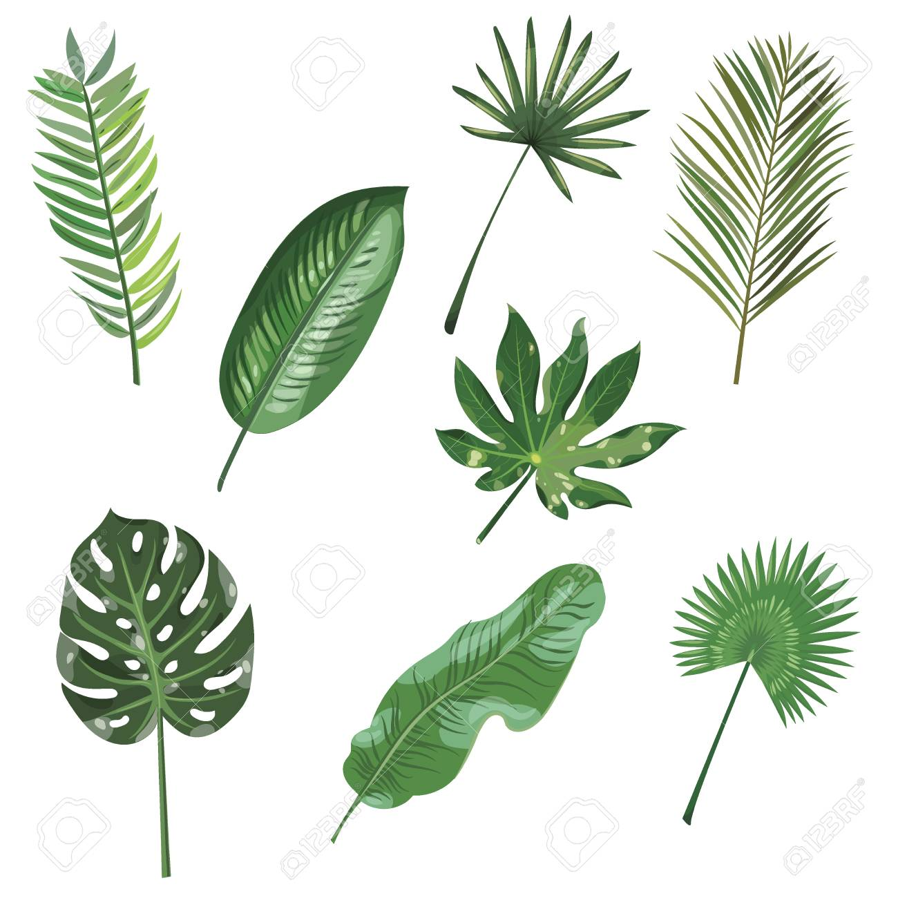 Set Of Leaves Of Tropical Plants Collection Of Exotic Leaves