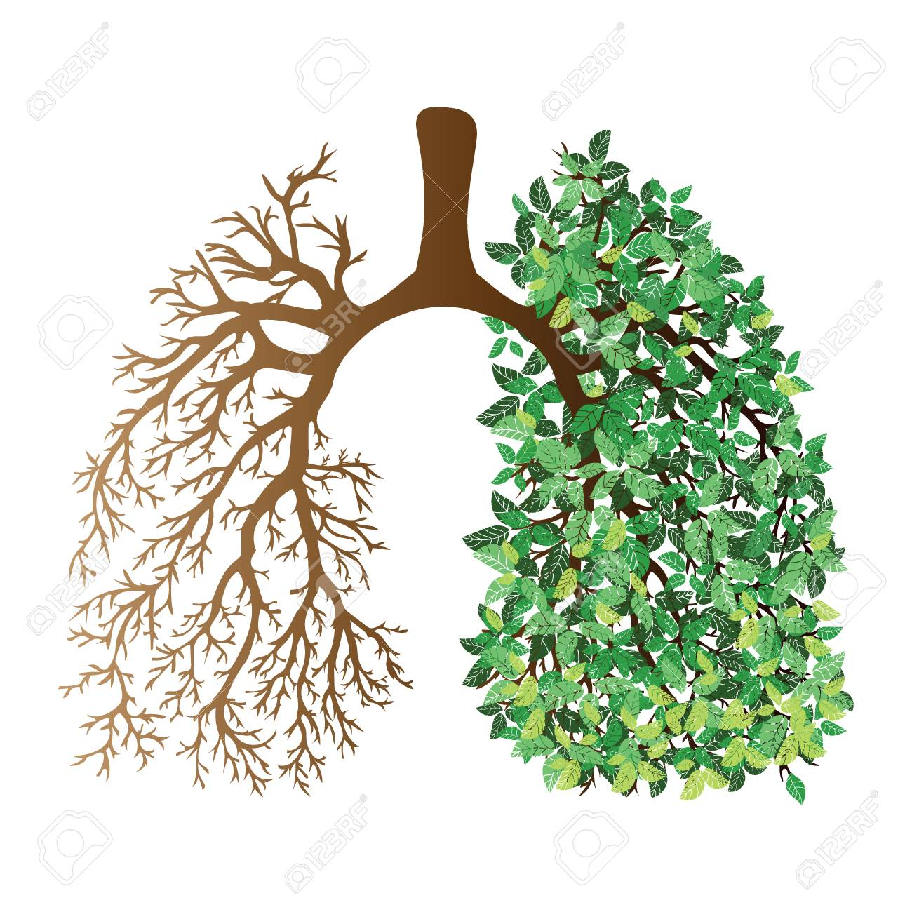 Human lungs. Respiratory system. Healthy lungs. Light in the form of a tree. Line art. Drawing by hand. Medicine. - 90830873