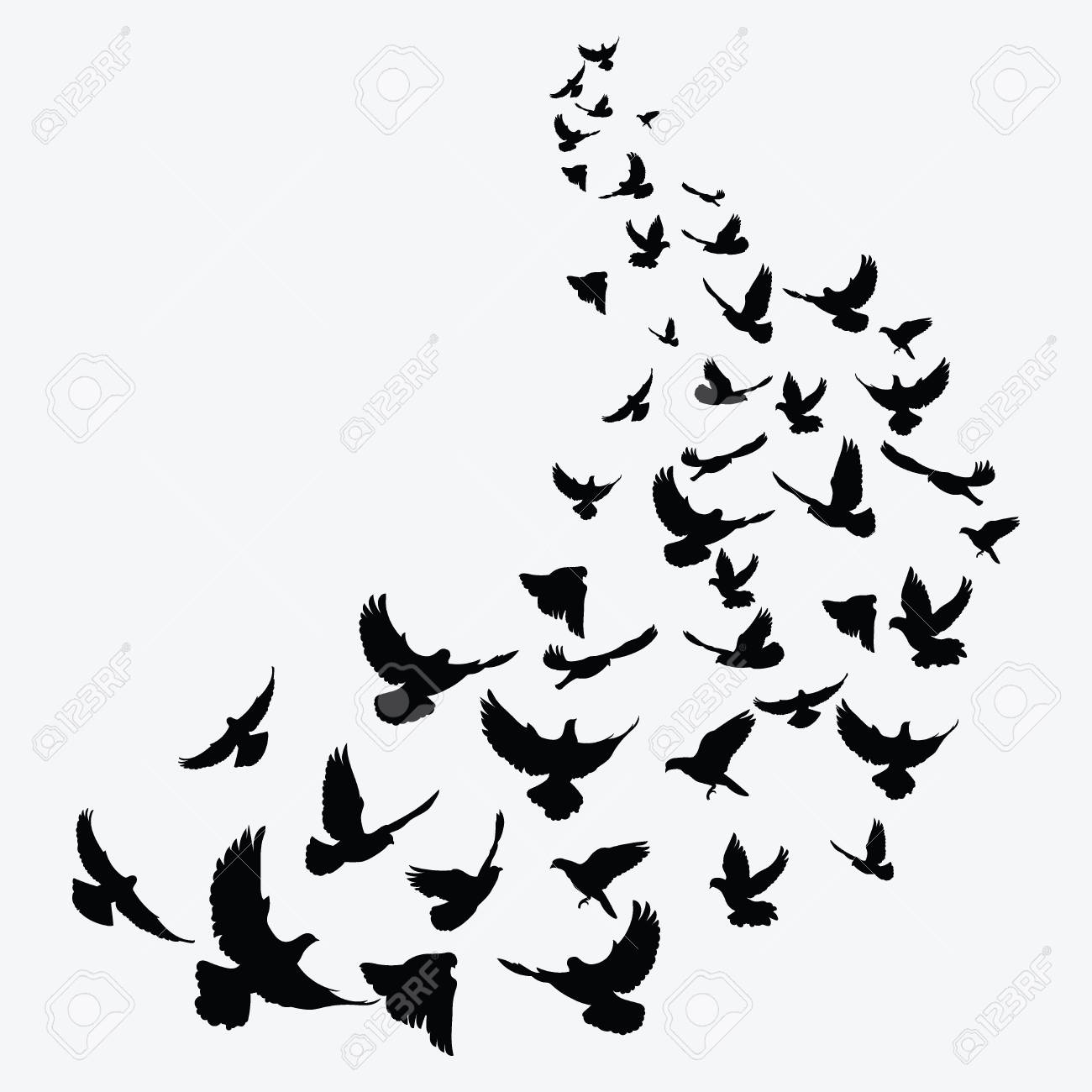 Silhouette of a flock of birds  Black contours of flying birds