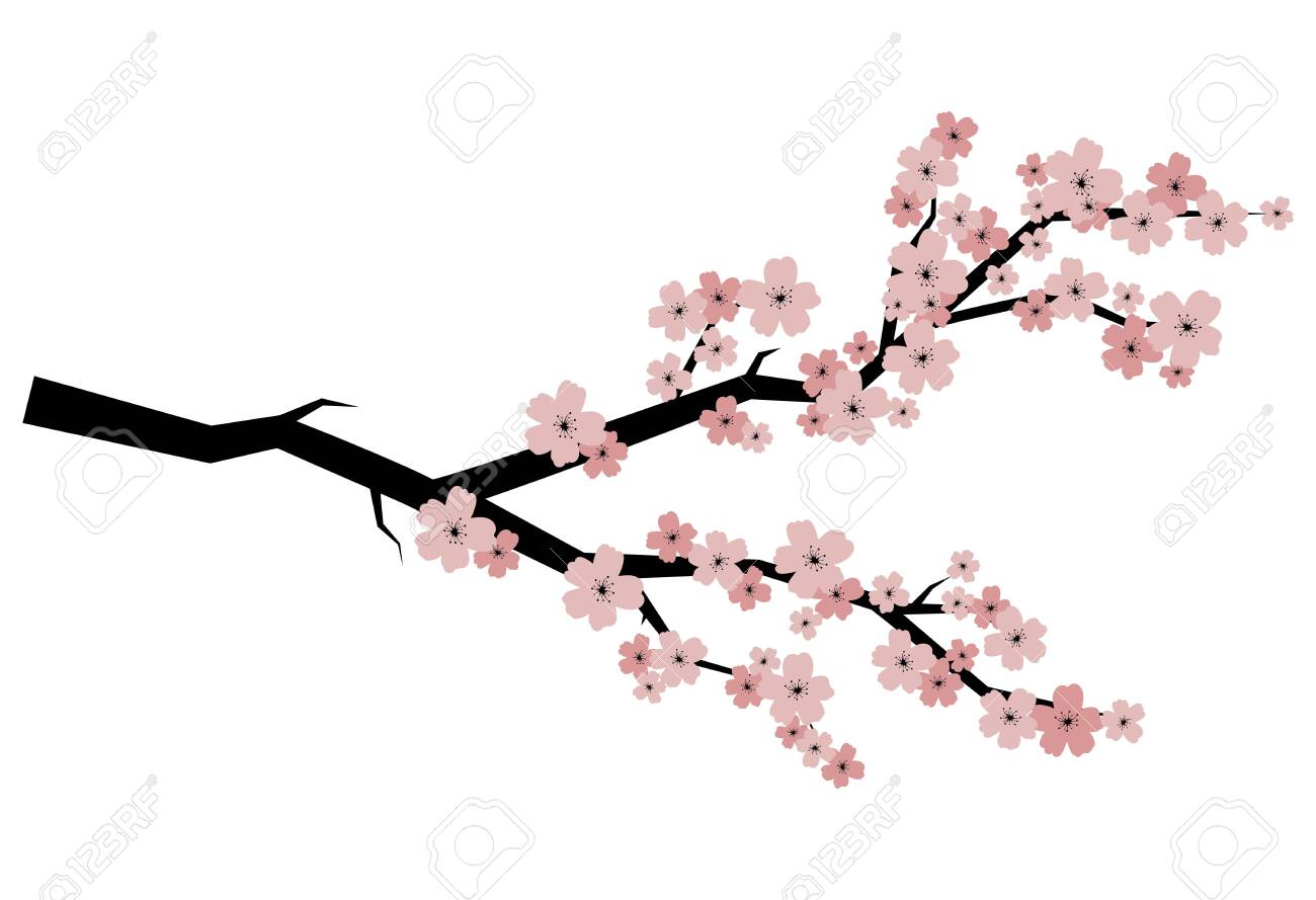 Blooming Cherry Sakura Branch With Flower Buds Cartoon Drawing Royalty Free Cliparts Vectors And Stock Illustration Image 130020241