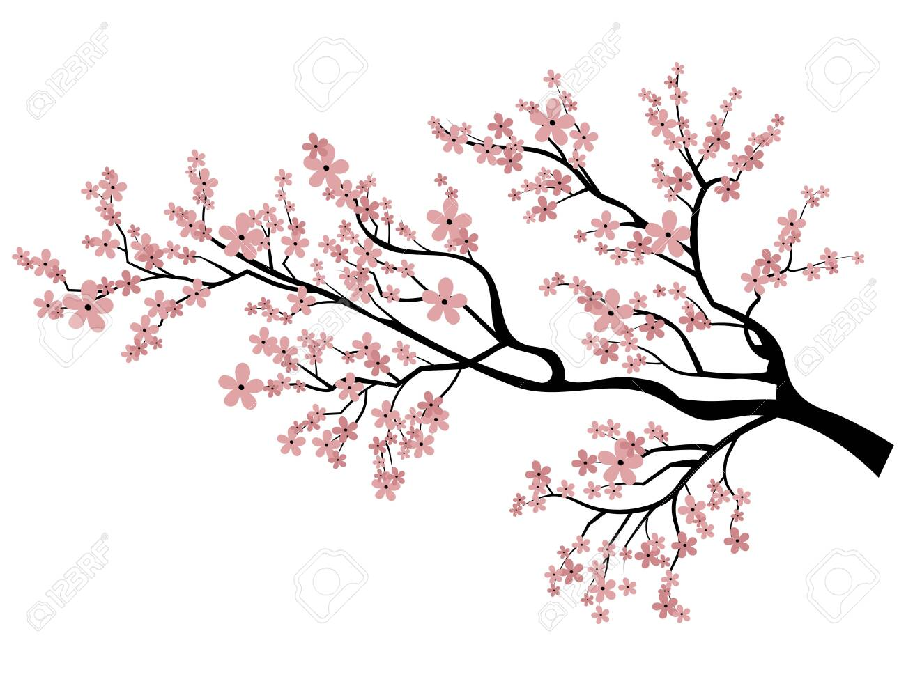 Blooming Cherry Sakura Branch With Flower Buds Cartoon Drawing Royalty Free Cliparts Vectors And Stock Illustration Image 130016870