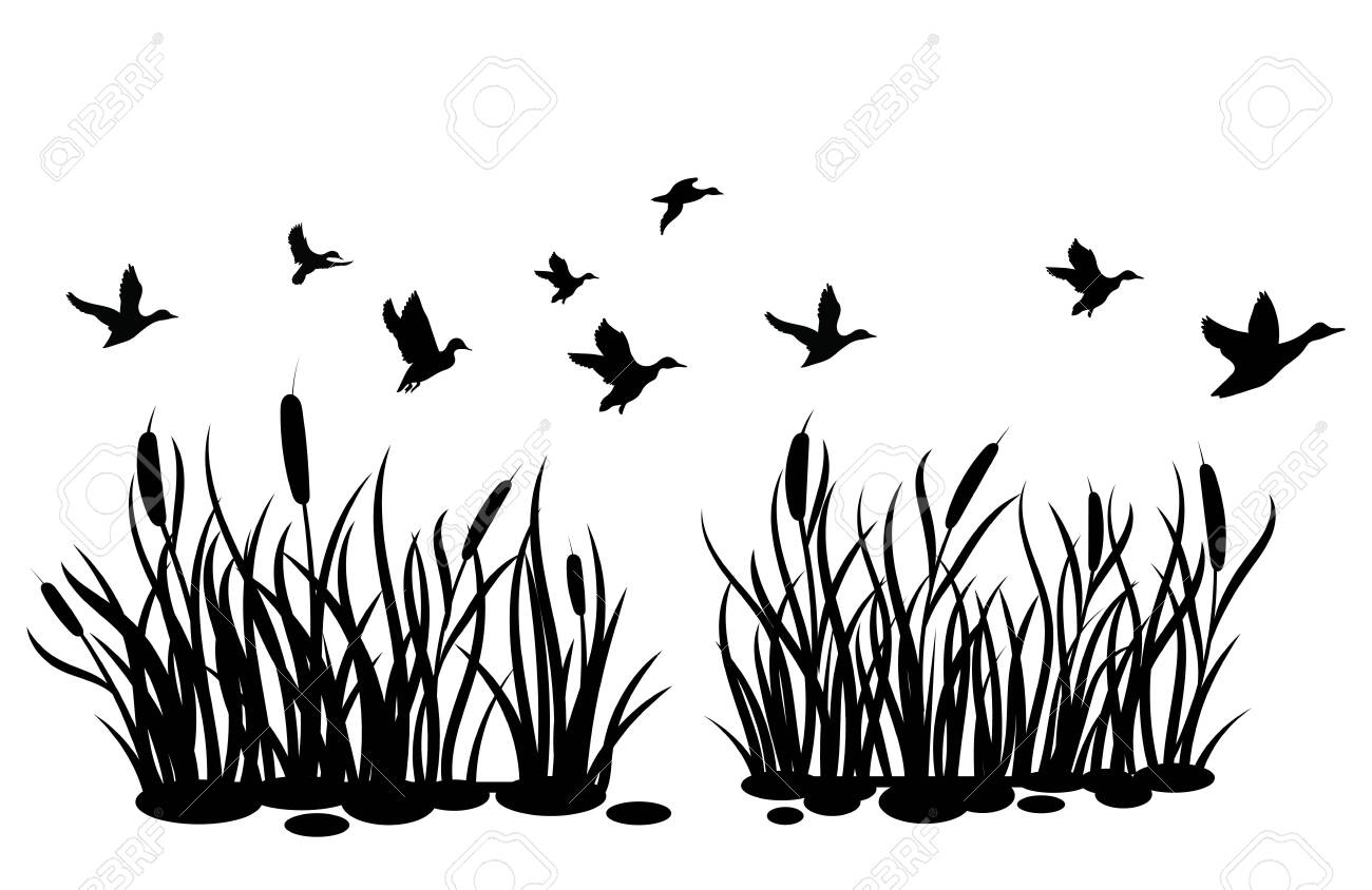 a flock of wild ducks flying over a pond with reeds black and royalty free cliparts vectors and stock illustration image 130321093 a flock of wild ducks flying over a pond with reeds black and