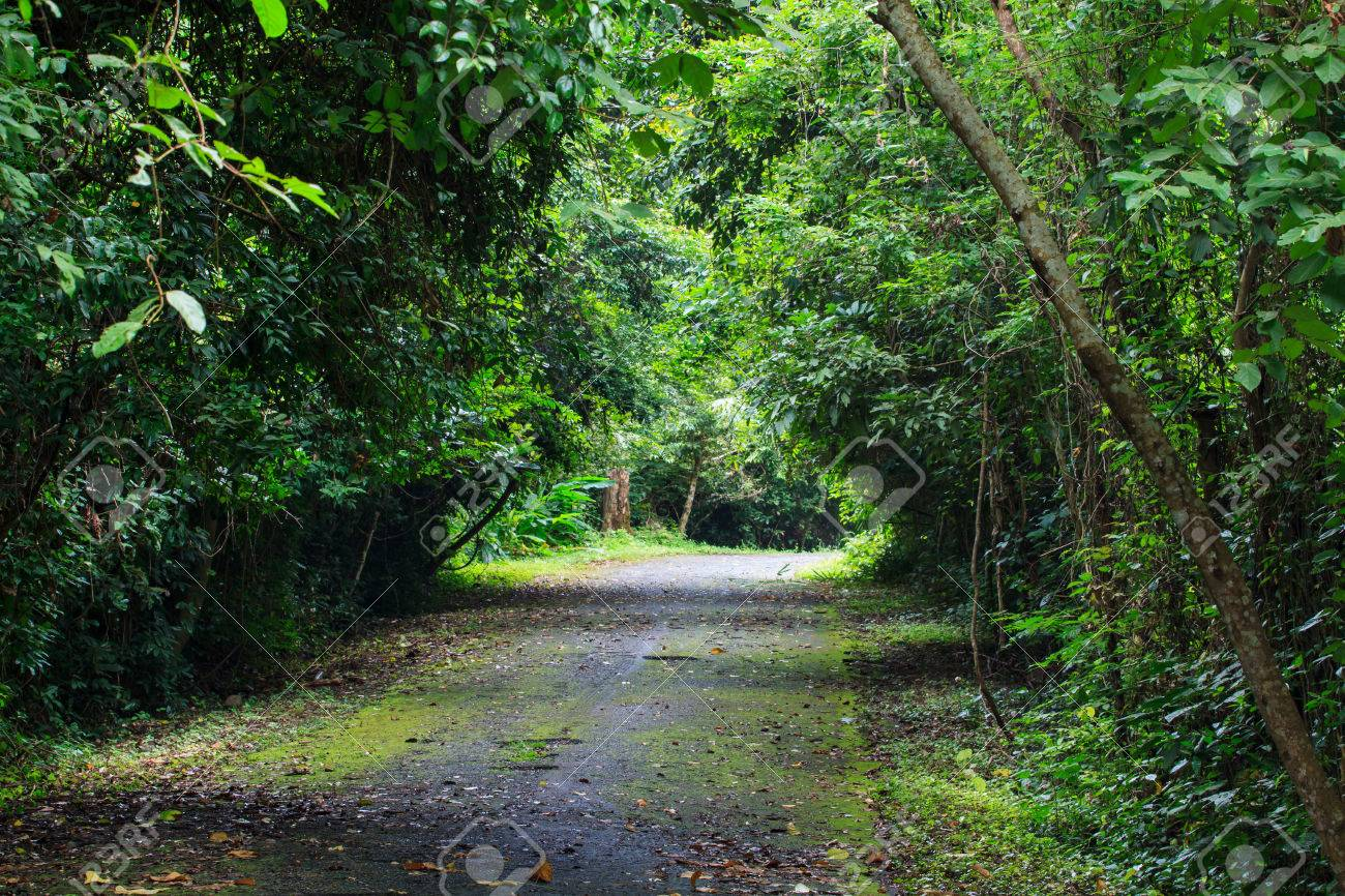 Tropical trees form a canopy and leaves above a country street Stock Photo - 32287146 & Tropical Trees Form A Canopy And Leaves Above A Country Street ...