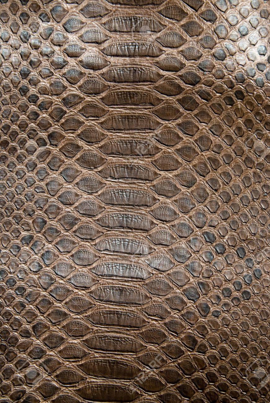 brown crocodile texture Stock Photo - 6694087