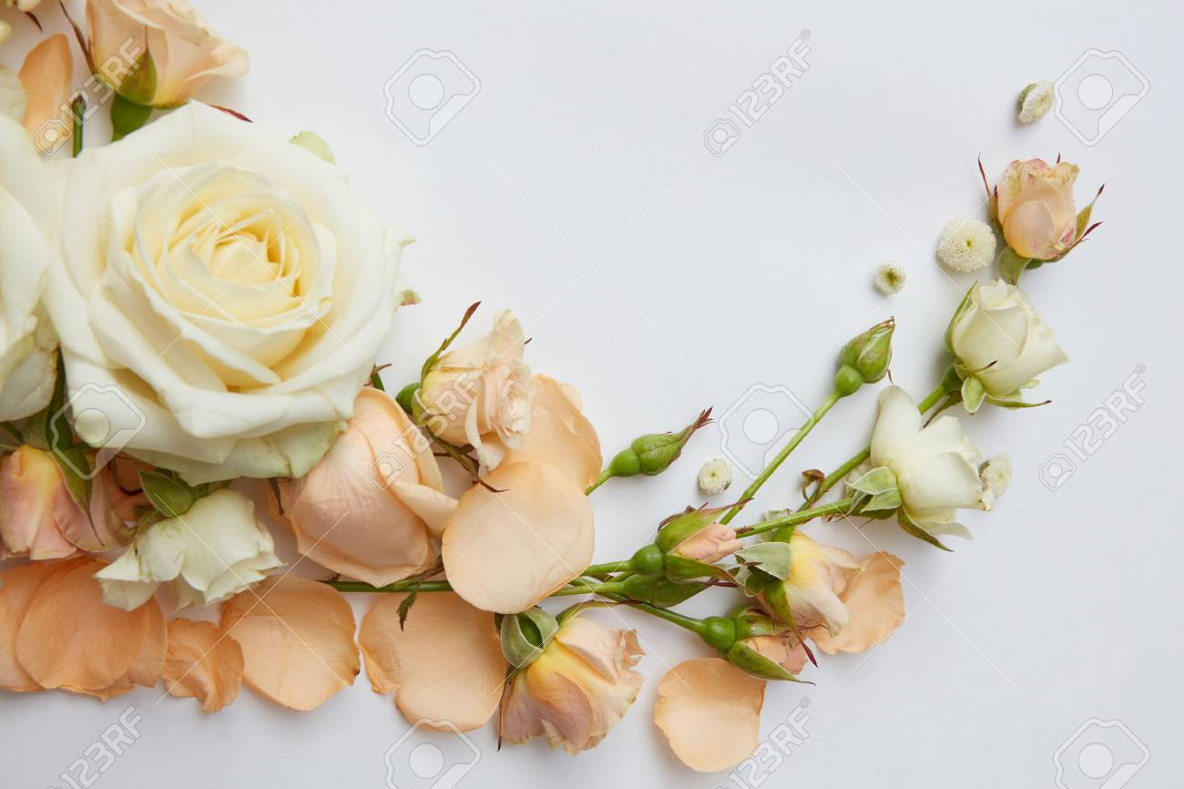 Composition Of White And Orange Roses Over White Background Stock