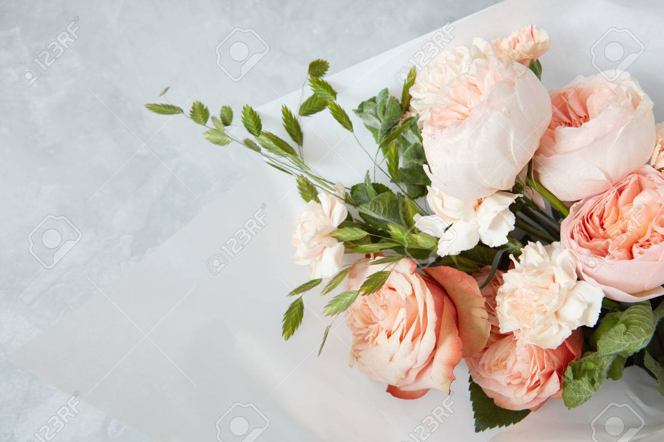 Roses on white background - 73469923