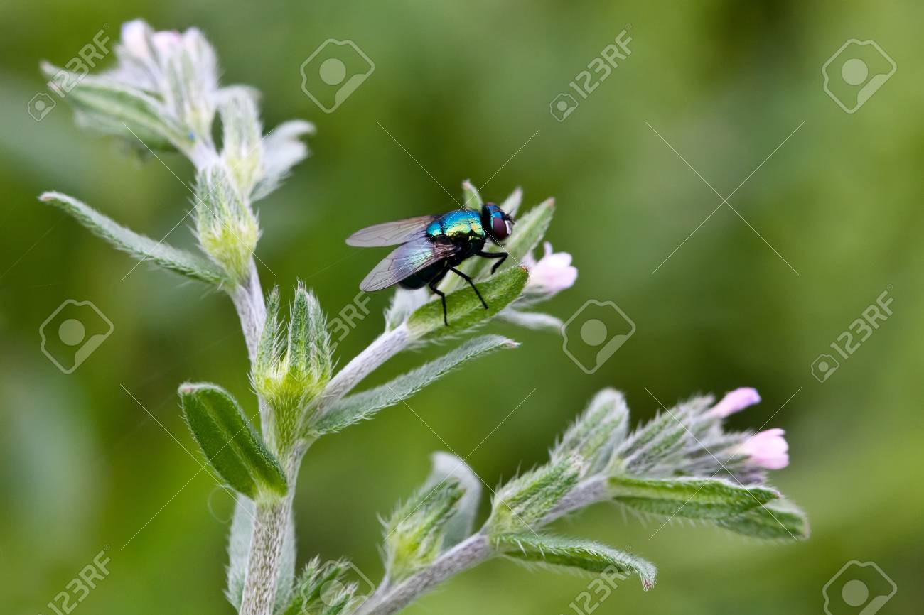 Green fly on the plant close up Stock Photo - 9954603