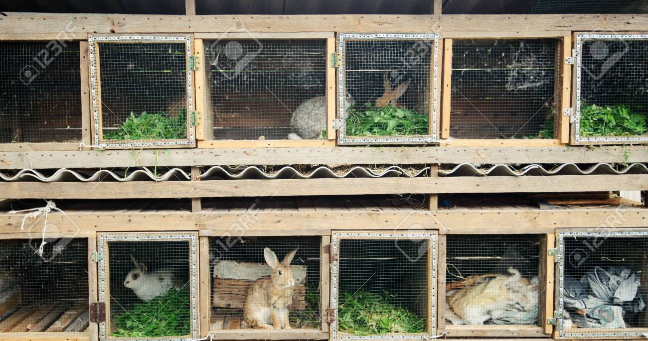 rabbits in the wooden cage - 128755218