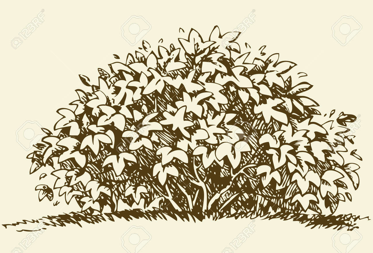 Cute big green deciduous bush with lush foliage. Vector monochrome freehand sketchy linear ink drawn backdrop in style pen on paper with space for text on sky - 158238768