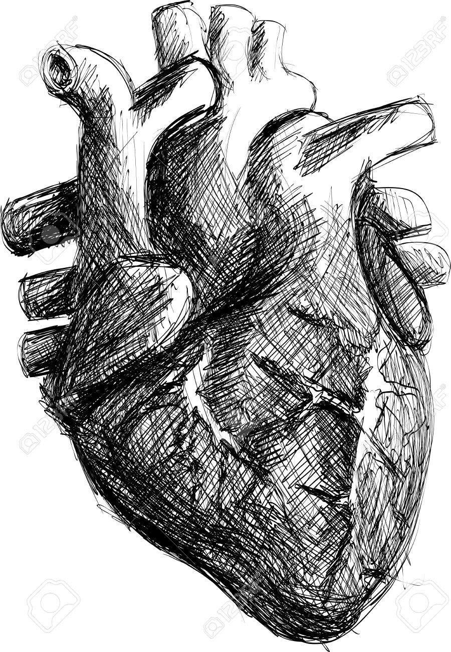 realistic black and white hand drawn human heart sketch royalty free rh 123rf com human heart sketch easy human heart sketch easy