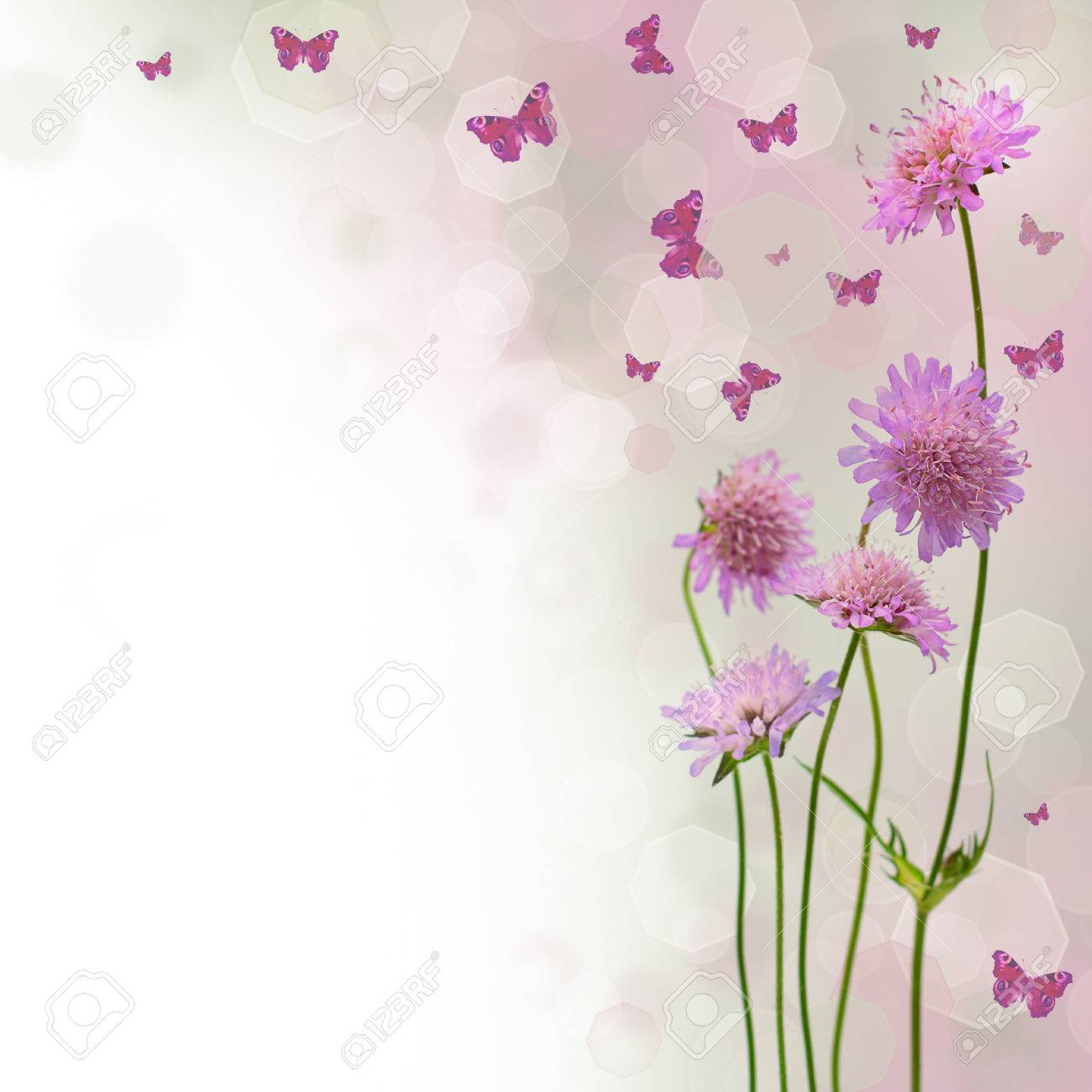 Fiori E Farfalle.Blossom Background Blurred Floral Border With Flowers And