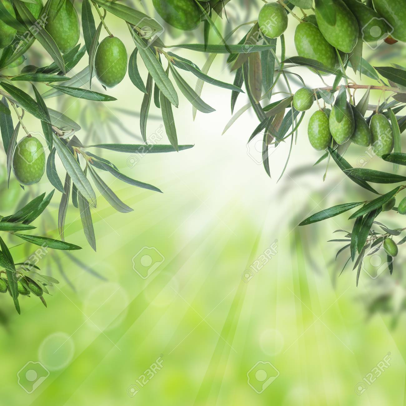 Green Olives And Leaves Of Olive Tree On Abstract Bokeh Light