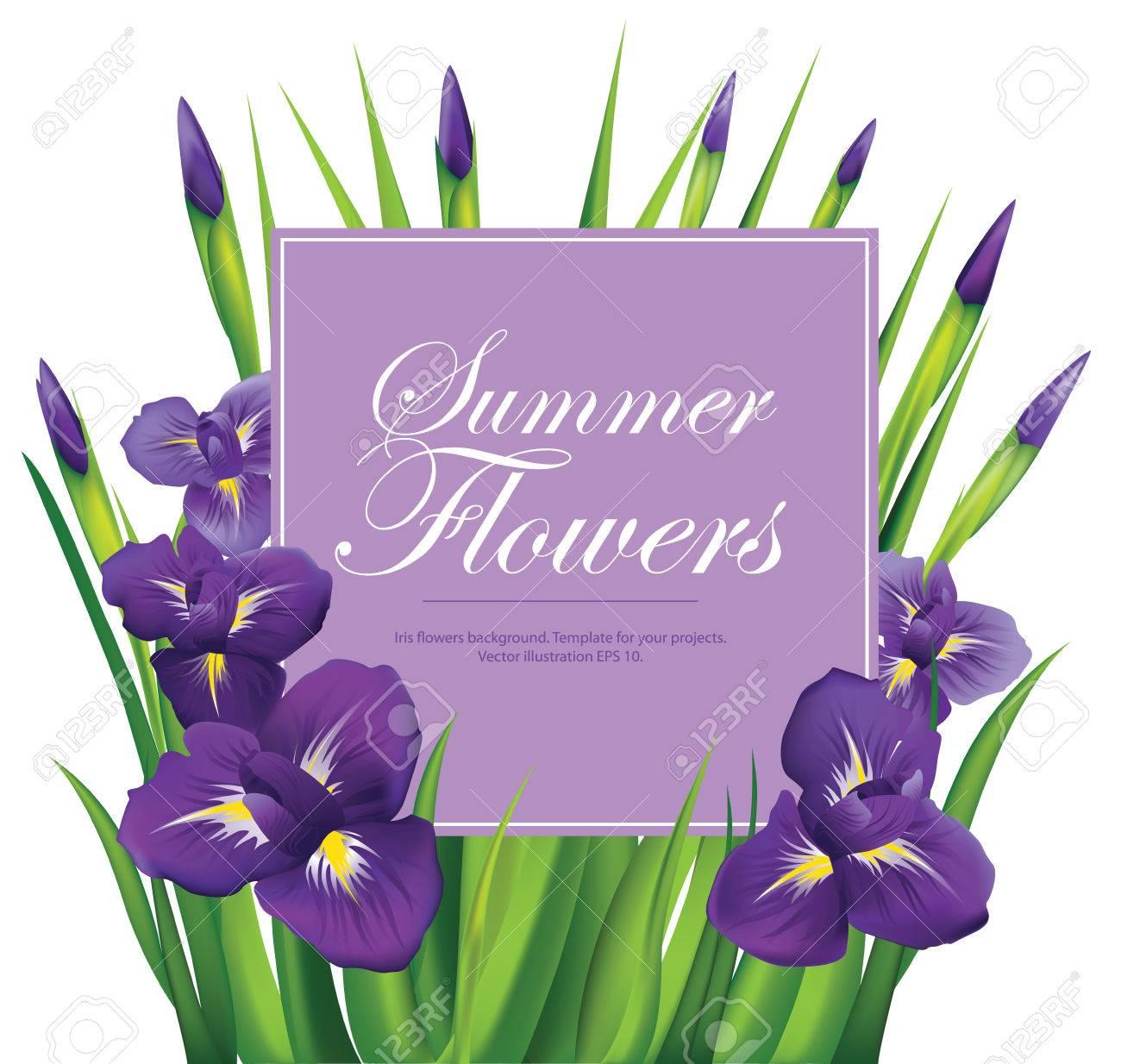 Iris Flowers Frame On White Background Vector Illustration Royalty