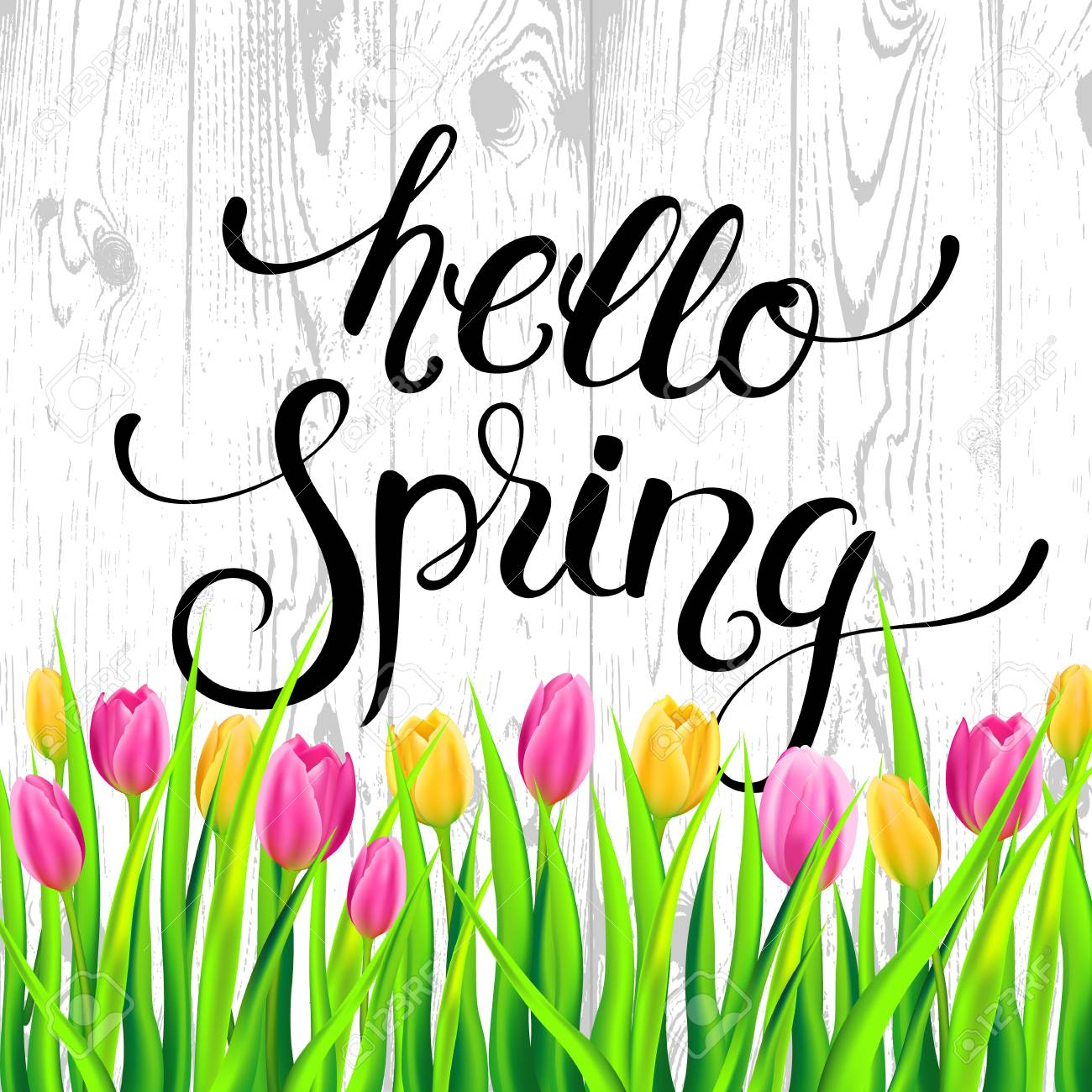 Hello Spring Card With Handwritten Calligraphy Lettering And Tulips On Wood  Texture Background. Vector Illustration