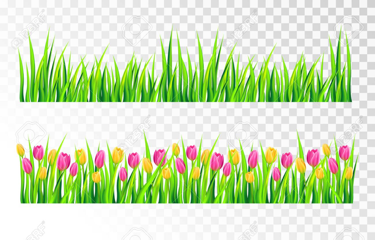 grass border no background golf grass and tulips borders set isolated on transparent background vector illustration stock and tulips borders set isolated on transparent background