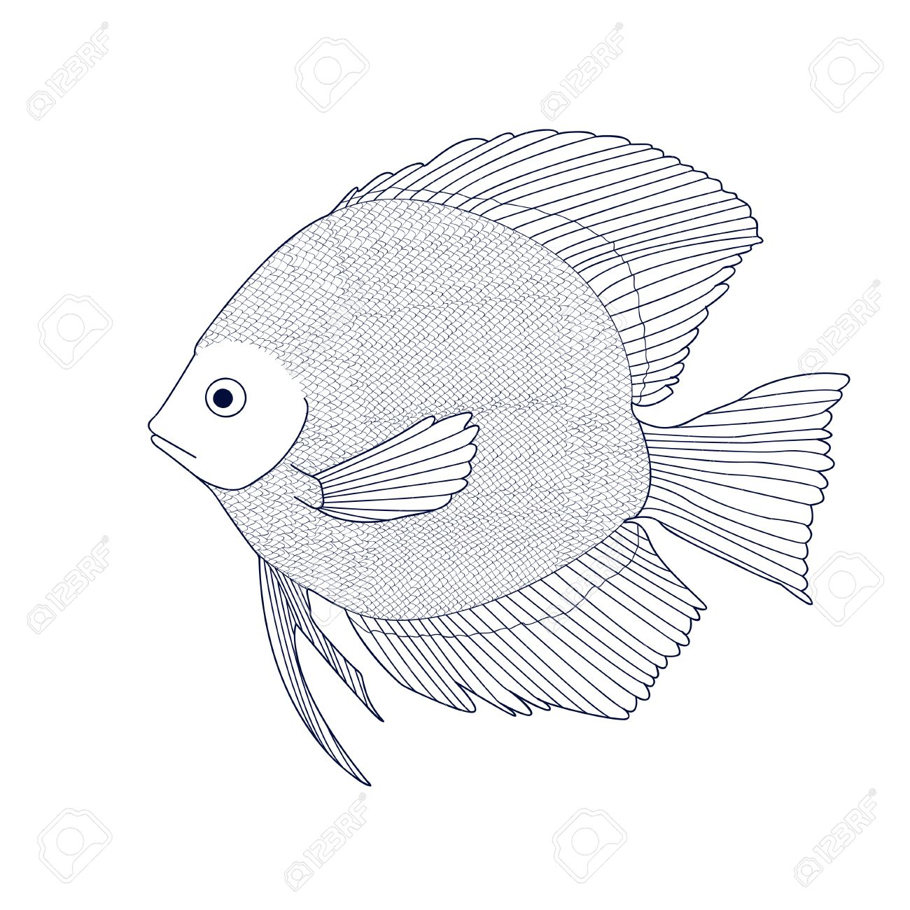 Discus Sketch Of Aquarium Fish Vector Royalty Free Cliparts
