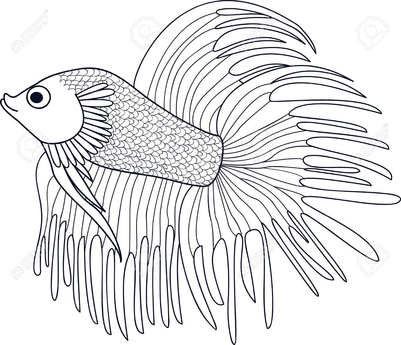 Fish Cockerel Sketch Of Aquarium Fish Vector Royalty Free Cliparts