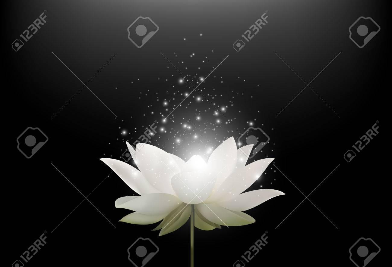 Magic white lotus flower on black background stock photo picture magic white lotus flower on black background stock photo 57767658 izmirmasajfo