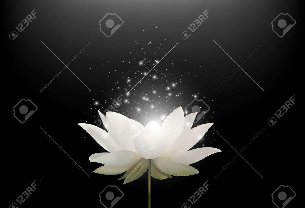 Vector illustration of Magic White Lotus flower on black background - 57530008