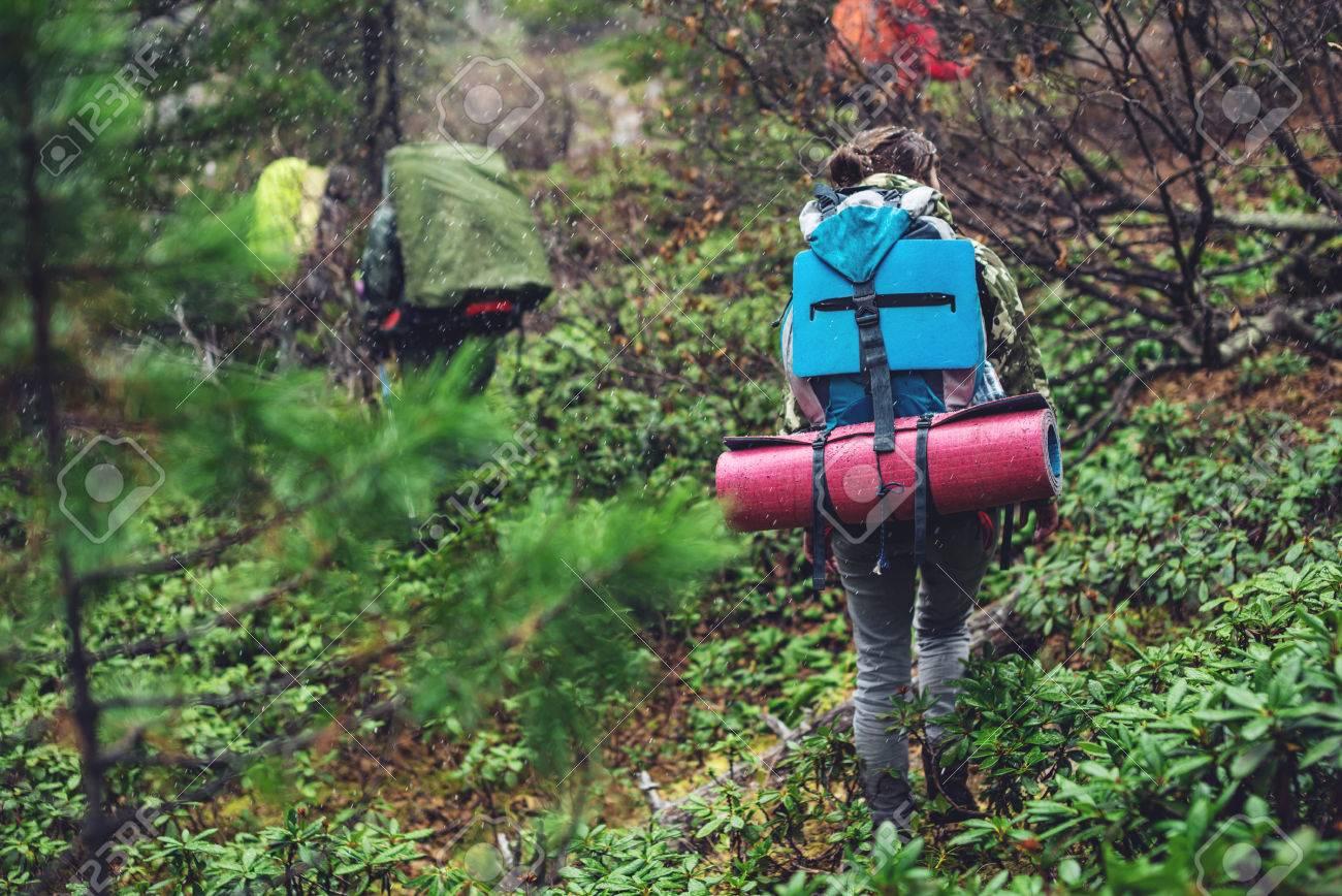 山の森林生態学的なアクティブな...