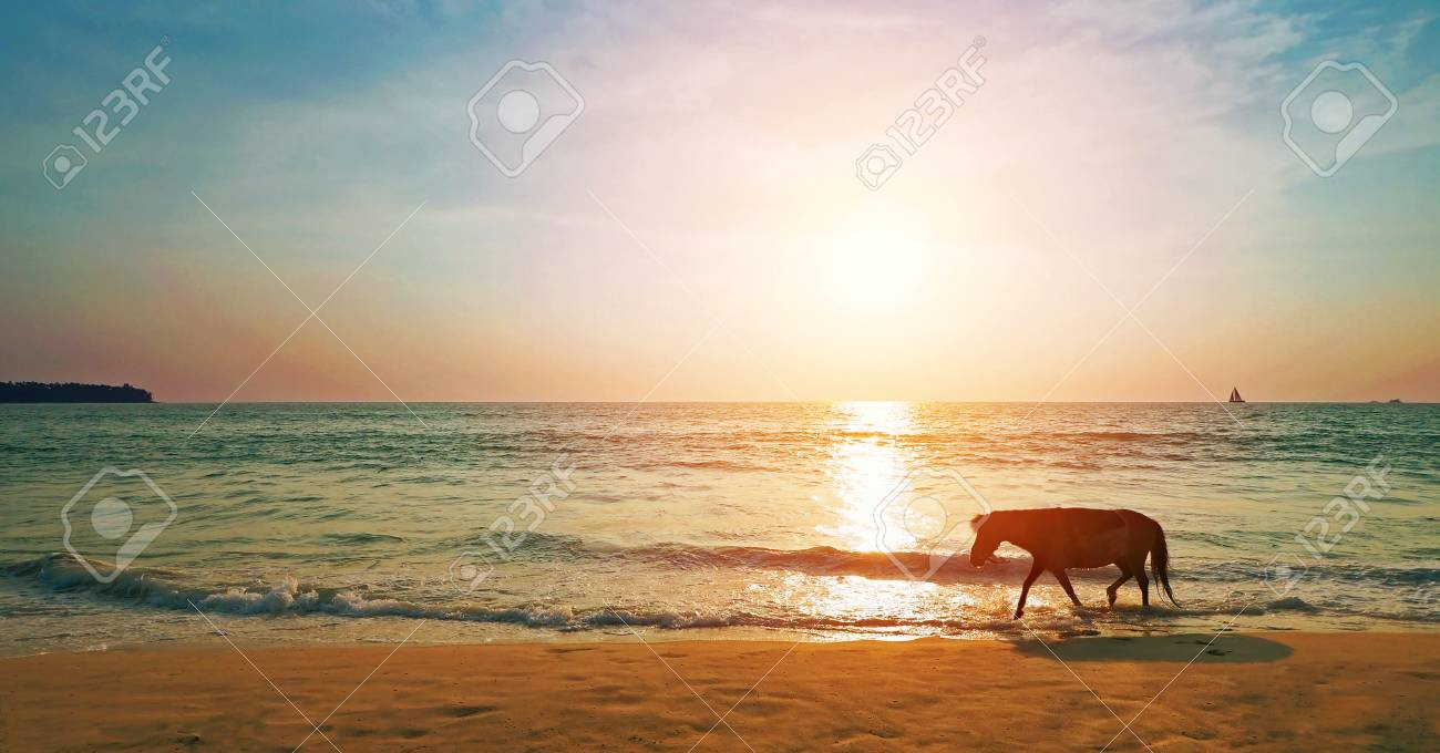 silhouette horse walk on the beach in evening time with sunset