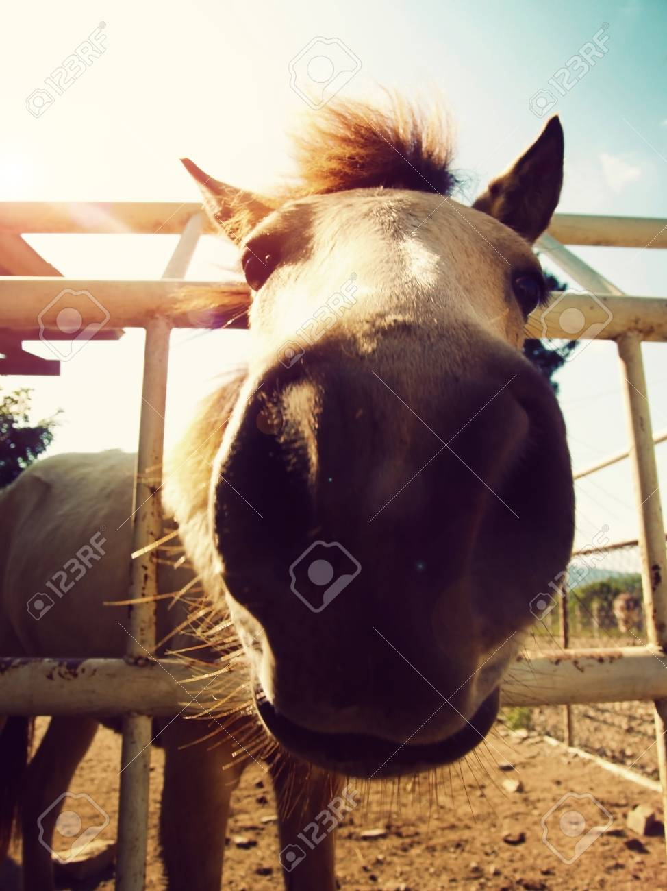 Close Up Horse Cute Funny Face Stock Photo Picture And Royalty Free Image Image 102322482